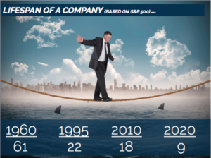 Lifespan of a Company